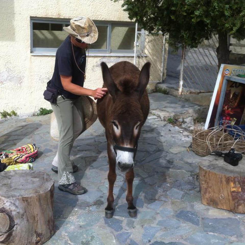 donkey_rides